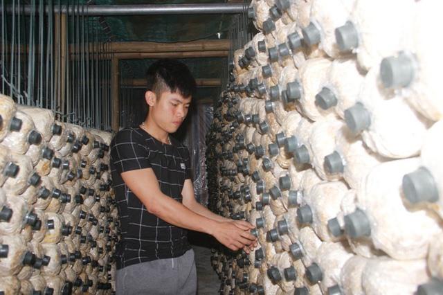 Quang Tri man applies Israeli knowledge to mushroom farming, vietnam economy, business news, vn news, vietnamnet bridge, english news, Vietnam news, news Vietnam, vietnamnet news, vn news, Vietnam net news, Vietnam latest news, Vietnam breaking news