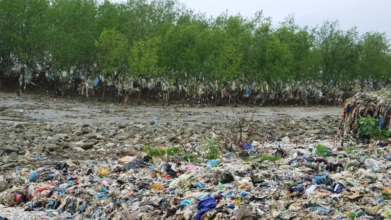 Thanh Hoa coastal forest swamped by rubbish, Vietnam environment, climate change in Vietnam, Vietnam weather, Vietnam climate, pollution in Vietnam, environmental news, sci-tech news, vietnamnet bridge, english news, Vietnam news, news Vietnam, vietnamnet