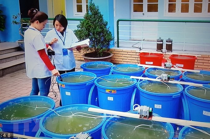 Hanoi releases algae to revive Hoan Kiem Lake, Vietnam environment, climate change in Vietnam, Vietnam weather, Vietnam climate, pollution in Vietnam, environmental news, sci-tech news, vietnamnet bridge, english news, Vietnam news, news Vietnam, vietnamn