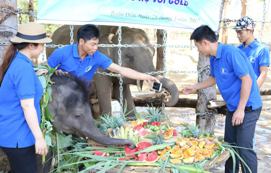 vietnam economy, business news, vn news, vietnamnet bridge, english news, Vietnam news, news Vietnam, vietnamnet news, vn news, Vietnam net news, Vietnam latest news, Vietnam breaking news, elephant conservation center, Dak Lak, wildlife