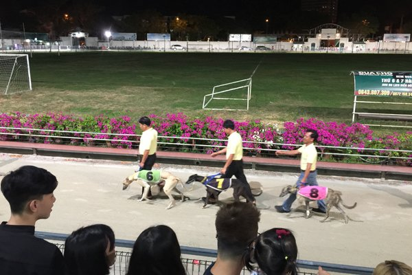 Danang undecided over horse and dog racecourse projects