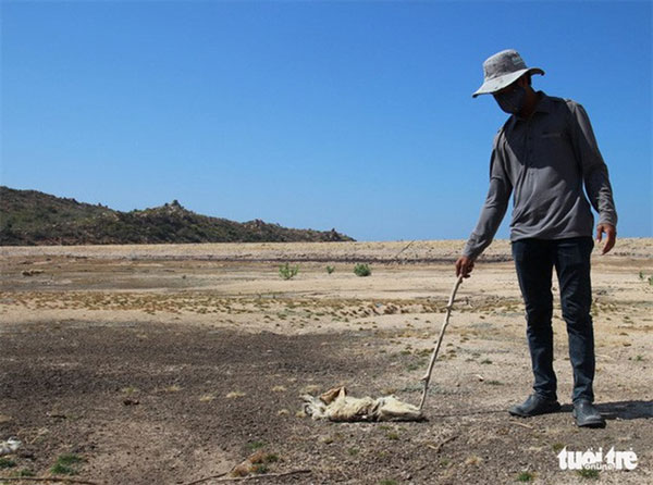 Ninh Thuan Province seeks support to fight drought
