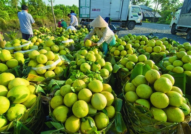 Clean production will help Vietnamese fruit compete with imports, Vietnam Young Lions 2018 winners announced, Hanoi's condo market attracts flow of foreign capital, Vietnam's coal imports grow despite large reserves