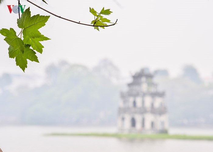 Hanoi plants red maple trees around Hoan Kiem Lake, social news, vietnamnet bridge, english news, Vietnam news, news Vietnam, vietnamnet news, Vietnam net news, Vietnam latest news, vn news, Vietnam breaking news
