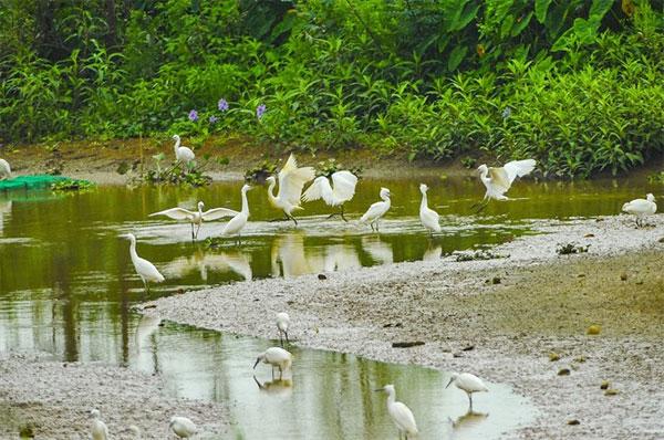 Stork Island, Ninh Binh, Vietnam economy, Vietnamnet bridge, English news about Vietnam, Vietnam news, news about Vietnam, English news, Vietnamnet news, latest news on Vietnam, Vietnam