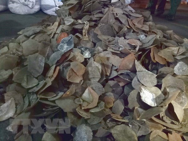 HCM City seizes 3.8 tonnes of pangolin scales, Vietnam environment, climate change in Vietnam, Vietnam weather, Vietnam climate, pollution in Vietnam, environmental news, sci-tech news, vietnamnet bridge, english news, Vietnam news, news Vietnam, vietnamn