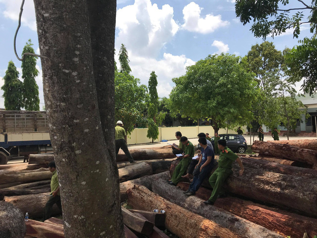 Police raid huge illegal logging site in national park, Vietnam environment, climate change in Vietnam, Vietnam weather, Vietnam climate, pollution in Vietnam, environmental news, sci-tech news, vietnamnet bridge, english news, Vietnam news, news Vietnam,