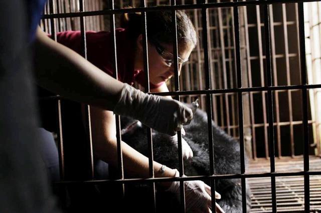 Two bears rescued from Ninh Binh farm, Vietnam environment, climate change in Vietnam, Vietnam weather, Vietnam climate, pollution in Vietnam, environmental news, sci-tech news, vietnamnet bridge, english news, Vietnam news, news Vietnam, vietnamnet news,