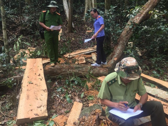 Vietnam deforestation cases in decline, Vietnam environment, climate change in Vietnam, Vietnam weather, Vietnam climate, pollution in Vietnam, environmental news, sci-tech news, vietnamnet bridge, english news, Vietnam news, news Vietnam, vietnamnet news