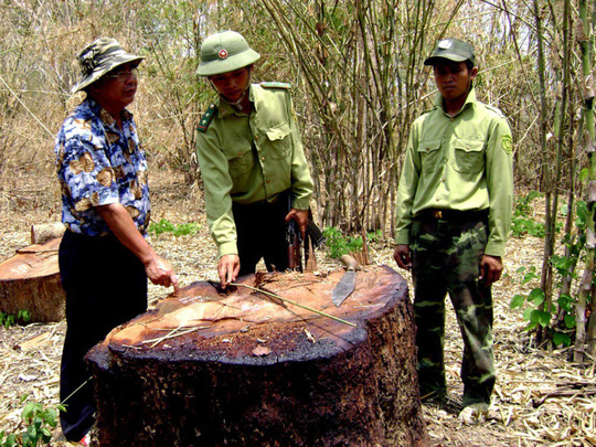 vietnam economy, business news, vn news, vietnamnet bridge, english news, Vietnam news, news Vietnam, vietnamnet news, vn news, Vietnam net news, Vietnam latest news, Vietnam breaking news, Yok Don National Park, deforestation, forest closure