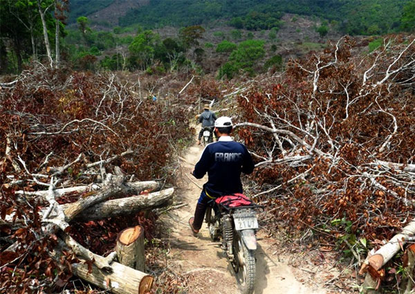 Ministry makes call for urgent measures to fight deforestation