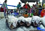 Feast on fancy fish eyes in tuna-loving Phu Yen