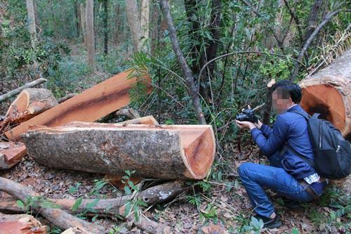 vietnam economy, business news, vn news, vietnamnet bridge, english news, Vietnam news, news Vietnam, vietnamnet news, vn news, Vietnam net news, Vietnam latest news, Vietnam breaking news, Yok Don, deforestation, Dak Lak