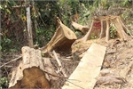 Illegal logging found in Quang Nam