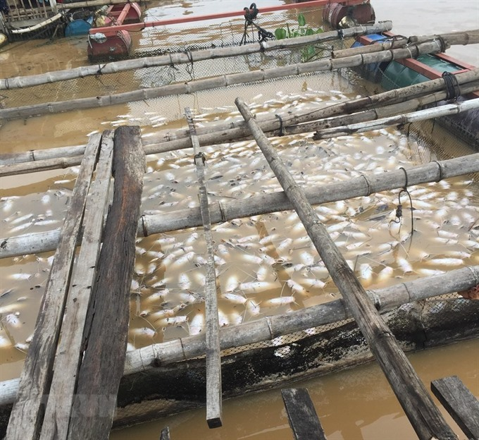 Pollution behind mass fish deaths incident in Dong Nai