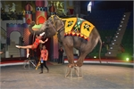 Vietnam Circus Federation responds against animal cruelty accusations