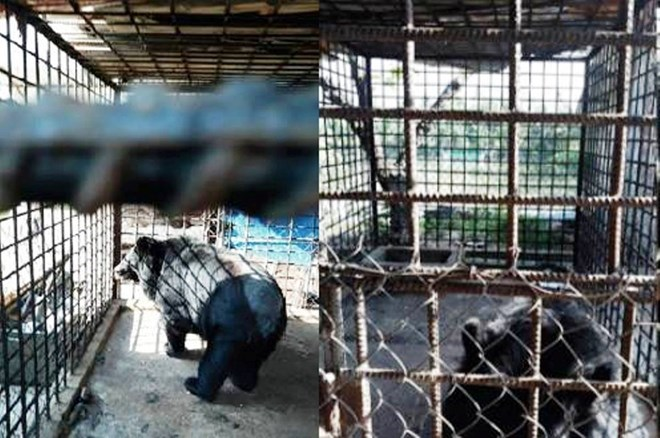 Can Tho reports no bears in captivity, Vietnam environment, climate change in Vietnam, Vietnam weather, Vietnam climate, pollution in Vietnam, environmental news, sci-tech news, vietnamnet bridge, english news, Vietnam news, news Vietnam, vietnamnet news,
