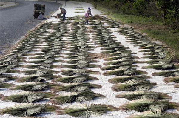 Kien Giang, Phu My Conservation project, Sarus cranes, Vietnam economy, Vietnamnet bridge, English news about Vietnam, Vietnam news, news about Vietnam, English news, Vietnamnet news, latest news on Vietnam, Vietnam