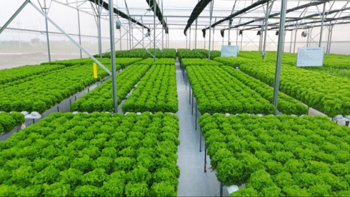 Many businesses see bold hope for agriculture investment, vietnam economy, business news, vn news, vietnamnet bridge, english news, Vietnam news, news Vietnam, vietnamnet news, vn news, Vietnam net news, Vietnam latest news, Vietnam breaking news