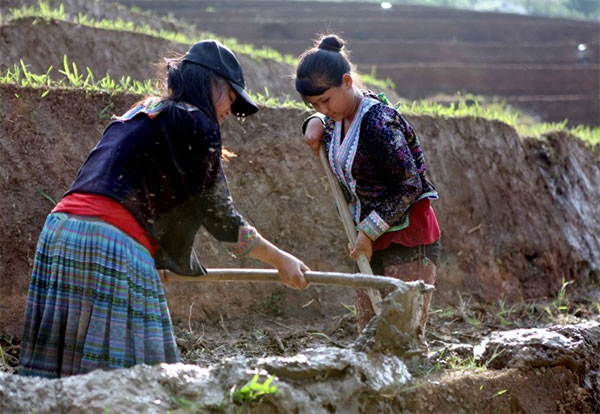 Ha Giang, Lao Cai, terraced fields, plant rice seedlings, Vietnam economy, Vietnamnet bridge, English news about Vietnam, Vietnam news, news about Vietnam, English news, Vietnamnet news, latest news on Vietnam, Vietnam