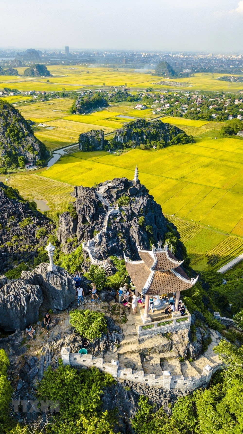 Golden ripe paddy fields looking from Hang Mua peak, travel news, Vietnam guide, Vietnam airlines, Vietnam tour, tour Vietnam, Hanoi, ho chi minh city, Saigon, travelling to Vietnam, Vietnam travelling, Vietnam travel, vn news