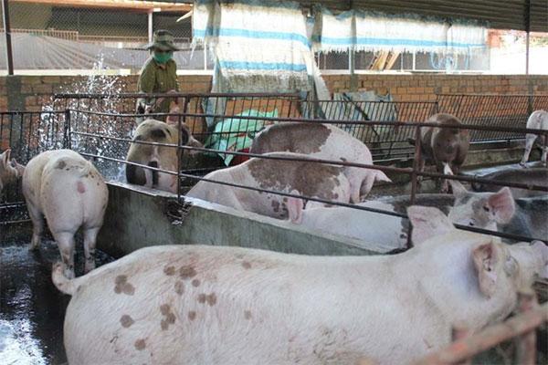 Major industrial livestock farms, livestock wastewater treatment, Vietnam economy, Vietnamnet bridge, English news about Vietnam, Vietnam news, news about Vietnam, English news, Vietnamnet news, latest news on Vietnam, Vietnam