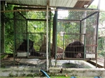 Two more bears sent to rescue centre