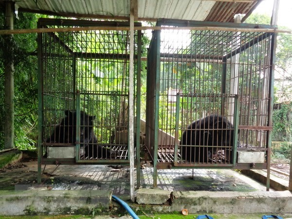 Two more bears sent to rescue centre, Vietnam environment, climate change in Vietnam, Vietnam weather, Vietnam climate, pollution in Vietnam, environmental news, sci-tech news, vietnamnet bridge, english news, Vietnam news, news Vietnam, vietnamnet news,