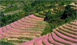 Bac Ha - destination for discovering natural beauty, ethnic culture