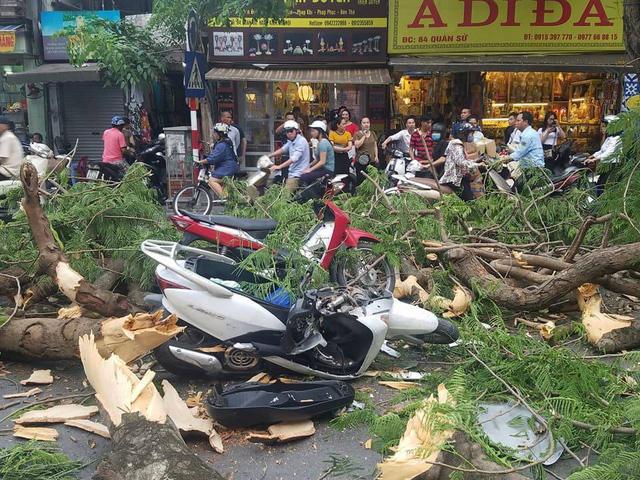 Old tree falls, injuring five in Hanoi