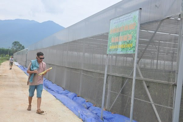 Danang urges investors to develop six hi-tech agriculture projects, vietnam economy, business news, vn news, vietnamnet bridge, english news, Vietnam news, news Vietnam, vietnamnet news, vn news, Vietnam net news, Vietnam latest news, Vietnam breaking new