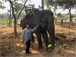 Don Village struggles to keep elephants for tourism