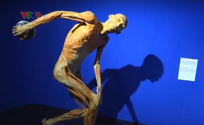 Exhibition on human body's mystery in HCMC