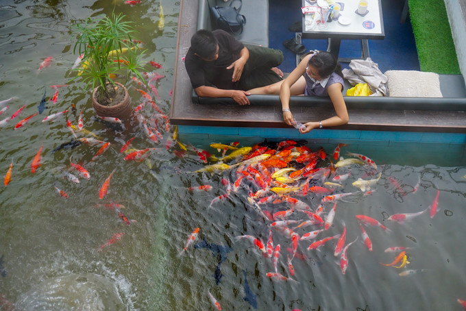 Discover koi fish caf in hcm city news vietnamnet for Koi pond quezon city