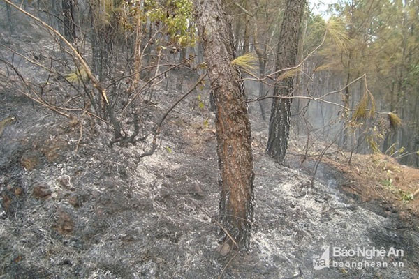 Forest fire, Nghe An, Ha Nam, hot weather, human health, Vietnam economy, Vietnamnet bridge, English news about Vietnam, Vietnam news, news about Vietnam, English news, Vietnamnet news, latest news on Vietnam, Vietnam