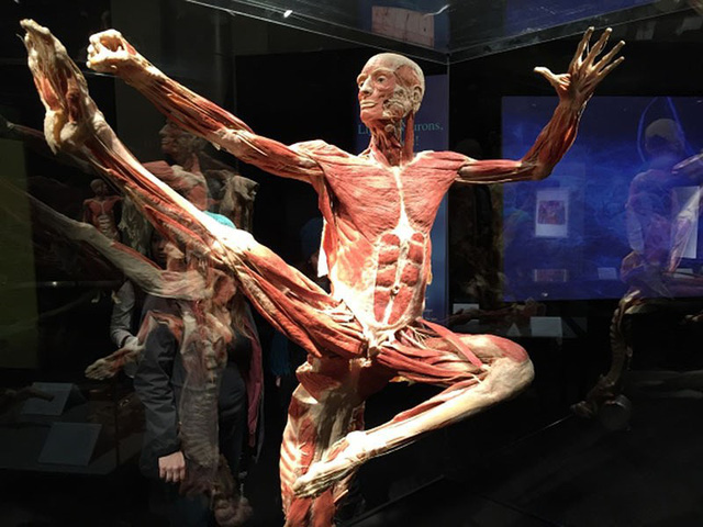 Mystery of the Human Body exhibition sparks controversies, entertainment events, entertainment news, entertainment activities, what's on, Vietnam culture, Vietnam tradition, vn news, Vietnam beauty, news Vietnam, Vietnam news, Vietnam net news, vietnamnet