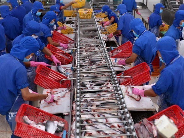 VASEP urges strict quality control of tra fish exported to China, vietnam economy, business news, vn news, vietnamnet bridge, english news, Vietnam news, news Vietnam, vietnamnet news, vn news, Vietnam net news, Vietnam latest news, Vietnam breaking news