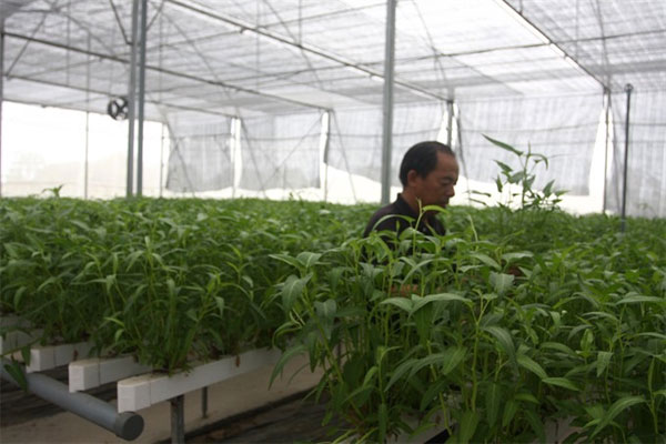 Organic farmers, growing clean vegetables, Vietnam economy, Vietnamnet bridge, English news about Vietnam, Vietnam news, news about Vietnam, English news, Vietnamnet news, latest news on Vietnam, Vietnam