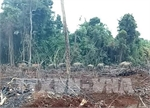 Wild elephants destroyed a vast area of local crops.