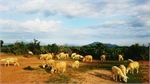 Homestay and tours of Ninh Thuan's rural areas