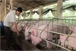 Vietnam pork prices highest in world