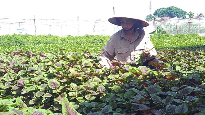 Vietnam's organic farming expansion faster than world average, vietnam economy, business news, vn news, vietnamnet bridge, english news, Vietnam news, news Vietnam, vietnamnet news, vn news, Vietnam net news, Vietnam latest news, Vietnam breaking news