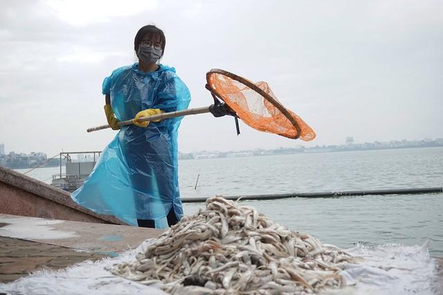 20180723163429 13 ¡Los ecosistemas se colapsan en todo el mundo! gaviotas caen del cielo, millones de peces mueren y ballenas se están varando inusualmente