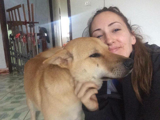 American woman promises big rewards to find missing dog, social news, vietnamnet bridge, english news, Vietnam news, news Vietnam, vietnamnet news, Vietnam net news, Vietnam latest news, vn news, Vietnam breaking news