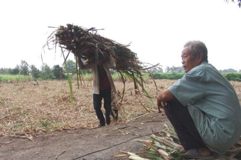 Many sugar mills face uncertain future, vietnam economy, business news, vn news, vietnamnet bridge, english news, Vietnam news, news Vietnam, vietnamnet news, vn news, Vietnam net news, Vietnam latest news, Vietnam breaking news