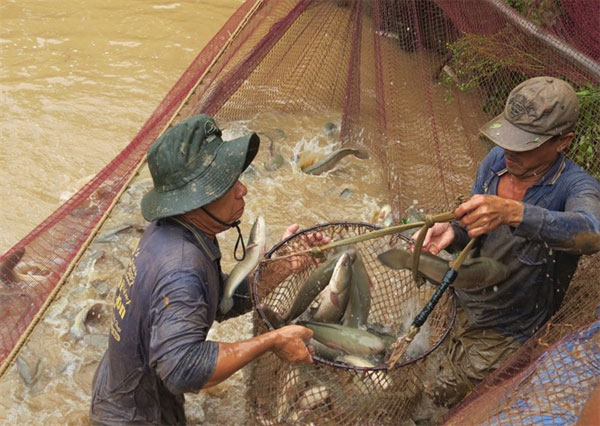 Dong Thap, floodwater, rice fields, protect agricultural production, Vietnam economy, Vietnamnet bridge, English news about Vietnam, Vietnam news, news about Vietnam, English news, Vietnamnet news, latest news on Vietnam, Vietnam