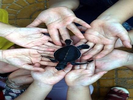 Ninh Thuan works to protect sea turtles, Vietnam environment, climate change in Vietnam, Vietnam weather, Vietnam climate, pollution in Vietnam, environmental news, sci-tech news, vietnamnet bridge, english news, Vietnam news, news Vietnam, vietnamnet new