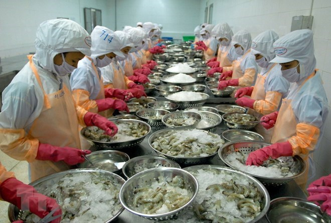 Vietnam's shrimp exports face technical barriers in Korea, vietnam economy, business news, vn news, vietnamnet bridge, english news, Vietnam news, news Vietnam, vietnamnet news, vn news, Vietnam net news, Vietnam latest news, Vietnam breaking news