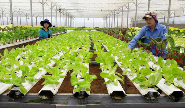 Investors still cannot make profits from hi-tech agriculture production