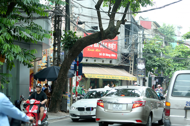 Hanoi trees at risk of collapse, social news, vietnamnet bridge, english news, Vietnam news, news Vietnam, vietnamnet news, Vietnam net news, Vietnam latest news, vn news, Vietnam breaking news